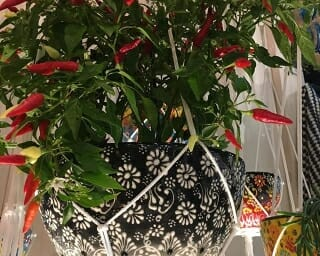 chilli hanging pot plant holder