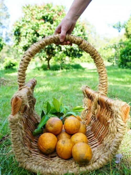 large u shaped wicker basket handmade
